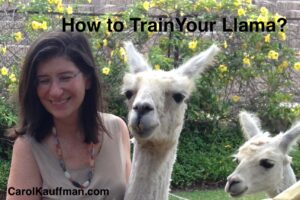 how to train your llama